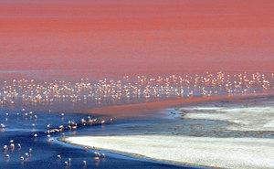 Flamingosineduardoabar003
