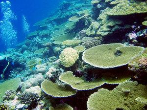 Chagosarchipelagoworlds001